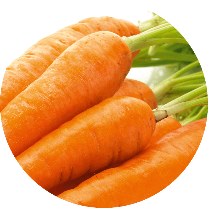 Carrot extract wirkstoff-carrot-extract.png
