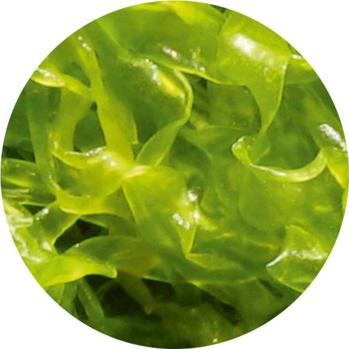 Green algae wirkstoff-green-algae.png